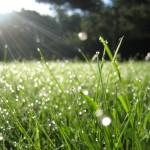 Трава у лагеря Вифиль