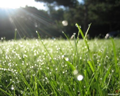 Трава у лагеря Вефиль