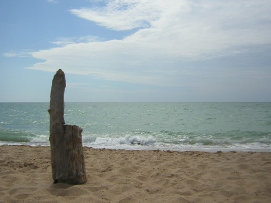 Пень и море в Анапе