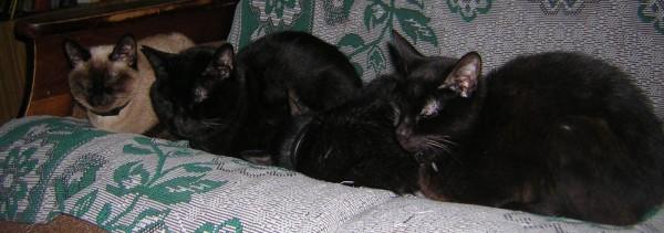Те же котики, но сбоку