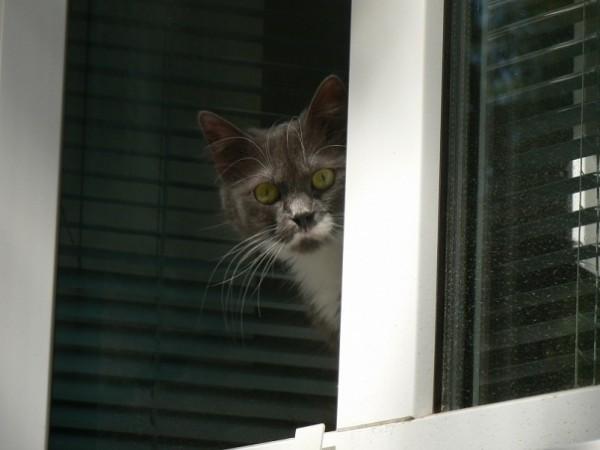 Кошка выглядывает из окна