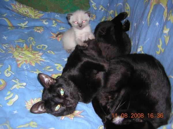 Маленький котеночек и родители