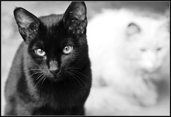 Чёрно-белое. Кот