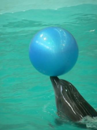 Дельфин и мячик в бассейне
