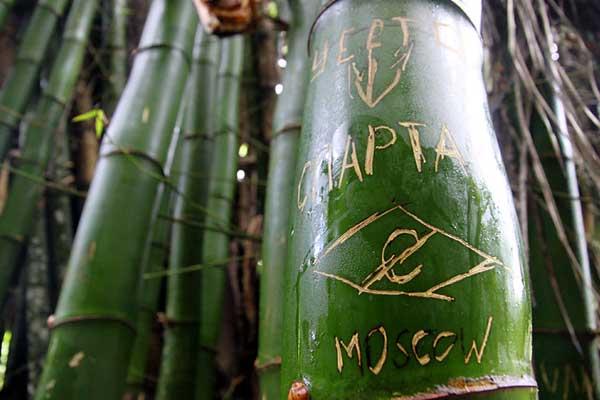 """Надпись """"Спартак"""" на стволе бамбука."""
