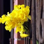 Цветы в оконной решётке.