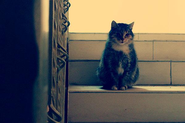 Кошка на лестнице.