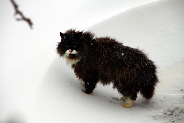 Мартовский кот.
