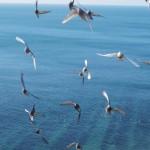 Чайки летят на обед