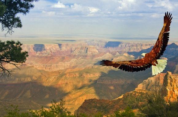 Гранд каньон и гордый орел