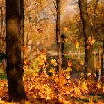 Осень, листья, учеба, школа