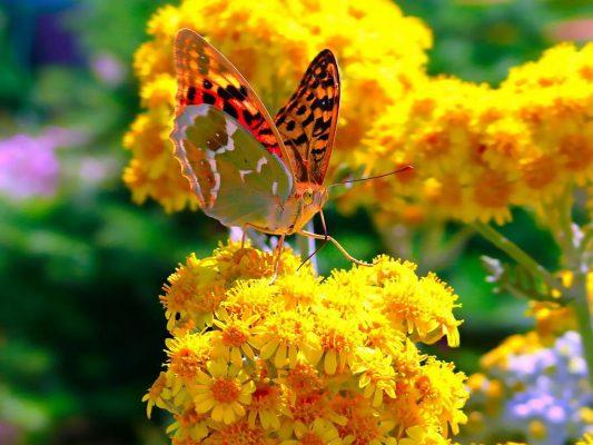Лето и бабочка